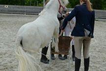 Pferde u. Ponys