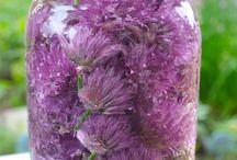 bylinky / recepty z byliniek