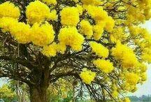 barwne drzewa