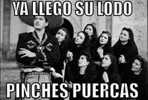 Risas y mas Risas / Latino funnies