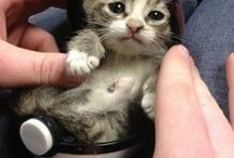 Cat / Really cute Baby kitten
