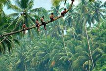 Maluku / Maluku,Indonesia,