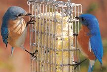 Birdfood and more