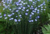 jardinage, plantes