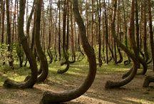 Unusual nature
