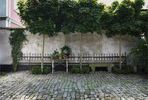 Trädgård - Träd
