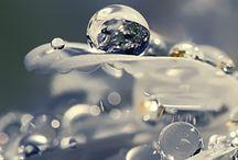 Fleur d'eau / Une fleur d'eau fraîche et aquatique accompagnée de notes boisées.