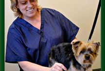 Pet Grooming at Leesburg Vet / Professional Grooming Services for dog and cats at Leesburg Veterinary Hospital.