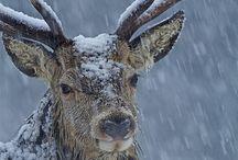 Winter / The beauty of winter