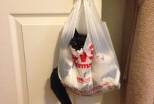shopping for a cat?
