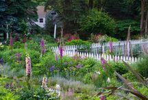 Flower garden / by Caretaker