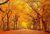 New York ideas / Sightseeing ideas for NY trip