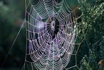 SpiderWeb/ Seittejä