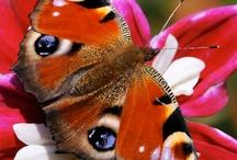 Dieren: Vlinders / Mooie foto's van vlinders