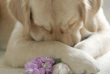 Cute Dogs & Cats  / . / by Christina