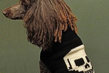 dog grooming /  styling groomer