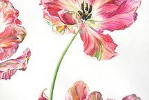 Botanical art / Art