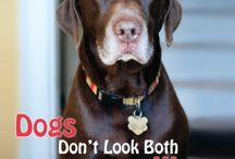 Dogs Don't Look Both Ways / My board's all about Labrador Retrievers and my book, Dogs Don't Look Both Ways