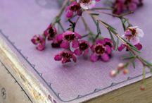 Viola - Purple ... j'adore