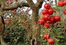 Fruit & Nut Cornucopia