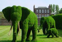 Garden: Closely Clipped, topiaries & hedges