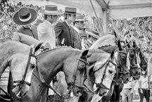Más de caballos - More of horses