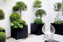 Rośliny