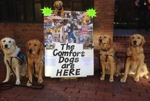 LCC C.D's. Answering the Call / The Lutheran Church Charities Comfort Dogs going to places in need of comfort, mercy, compassion and the presence of God.