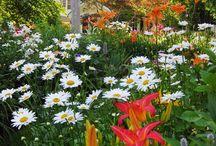 Gardens / Plants