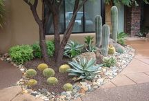 Front Yard Landscaping / Desert Oasis, desert, succulents, cacti, landscaping