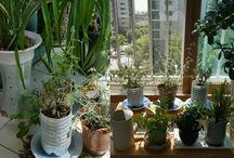 은은euneun plants