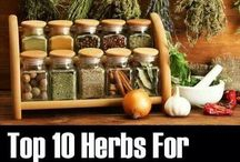herbs for diabetes / by Dusty