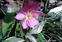 Flowers (Flores) fotografías / by Karina Diaz P.