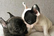 Bulldogg Love / #Bully#love#knutschkugel