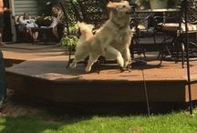 Amazin Dog Gifs