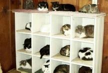 Interior Design For Cats