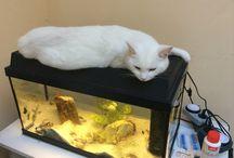 Tunci and the aquarium