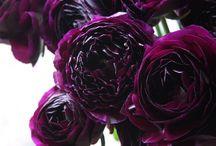 Ranunculus / Gorgeous ruffled blooms