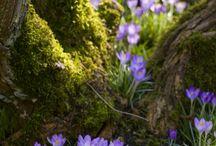 Весна. Spring.