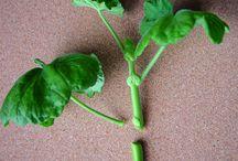 Tips kring växter