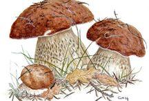 Mushroom n Mushroom Art