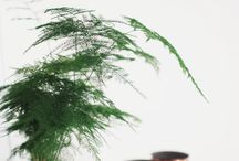 växande saker att pryda en växtälskares hus