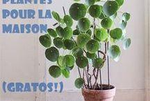 Plantes maison/balcon