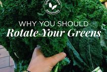 Green Smoothies / Recipes and info about going green