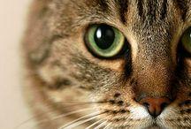 Moo the tabby cat