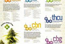 Cannabinoid info