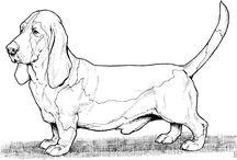 Рисунки собаки