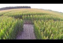 Steele Farms......