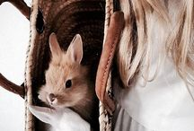 ~ Animals