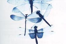 Butterflies, Dragonflies, & Lady Bugs :)